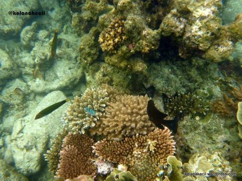 Underwater karimunjawa #8 di sekitar pulau taka bimbang