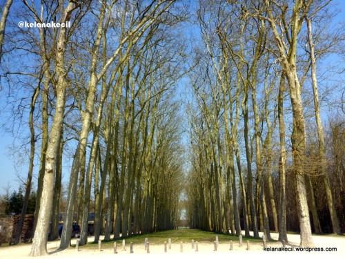 Pepohonan yang tersusun rapi di taman Versailles